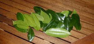 huile-essentielle-pimenta-racemosa