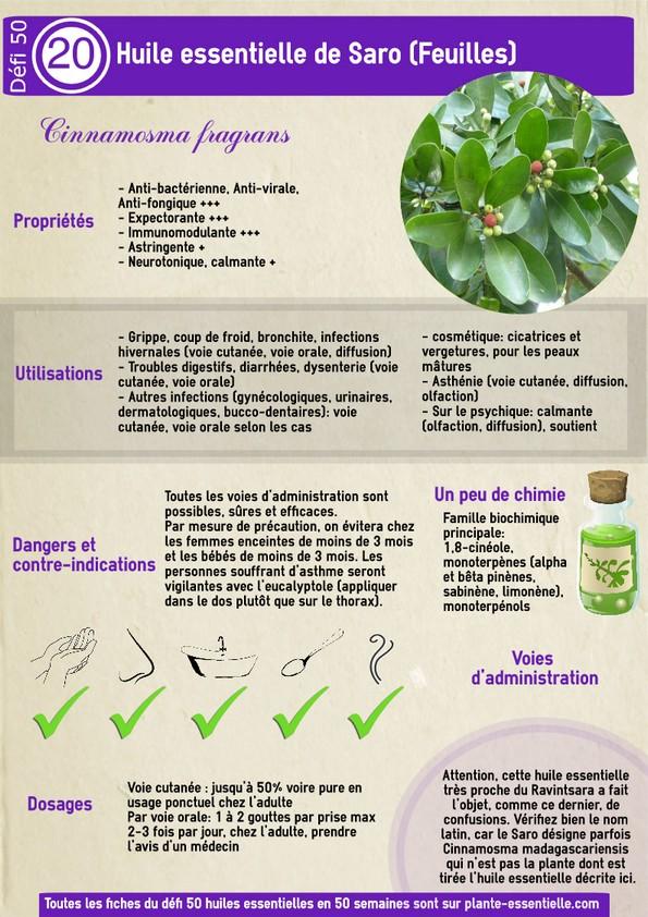 Grossiste en plantes m dicinales belgique for Plantes belgique