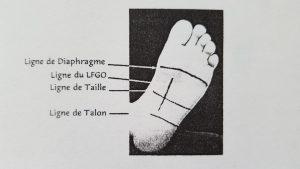 diaphragme-reflexologie