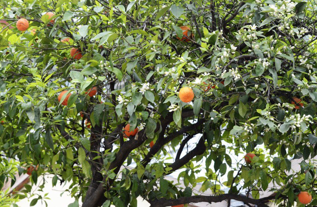 he-orange-amere