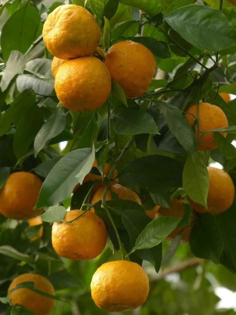 huile-essentielle-orange-amere